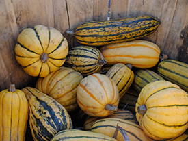 Happy Farmers' Market Thanksgiving: The Not-So-Secret Holiday for Zero Food Waste