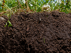 Ask our Help Desk: How do I prepare my soil for gardening?