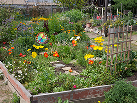 Action Item: City of Berkeley Community Gardens Amendment