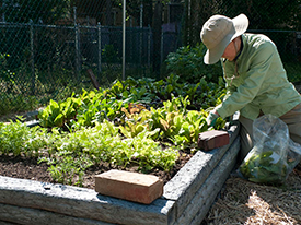 Action Item: Support Berkeley's Urban Ag Package