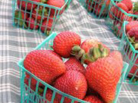 Welcome Back to the Albany Farmers' Market, Wednesday, 4/17/13