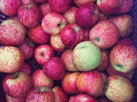 Give Thanks for Farmers! Shop the Tuesday Farmers' Market for your Holiday Meal