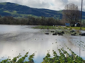 Flooding at Happy Boy Farms this spring