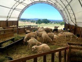 Weirauch Creamery Farm Visit