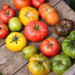 Seed Savers Exchange - Vegetable, Herb, Pollinator Seeds