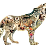 Native American Wolf 750 pc Puzzle