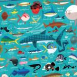 Mudpuppy Ocean Life 1000 pc Puzzle