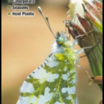 Butterflies of Central & Northern California: A Guide to Common & Notable Species