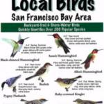 Local Birds Pocket Guide – San Francisco Bay Area