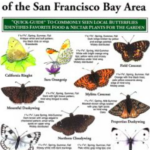Local Butterfly Pocket Guide – San Francisco Bay Area