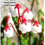 Wildflowers of the Sierra Nevada: A Guide to Common Native Species